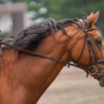 「死んだ馬」の法則